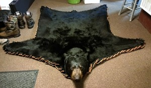 The rug made from the hide of the bear Shawn and Todd shot in 2012.